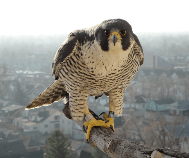 Falcon Announces $400,000 Strategic Private Placement